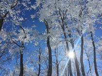 (冬)スノーシュー3