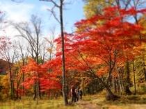(秋)紅葉(大清水)