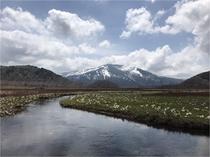 (春)尾瀬ヶ原6月