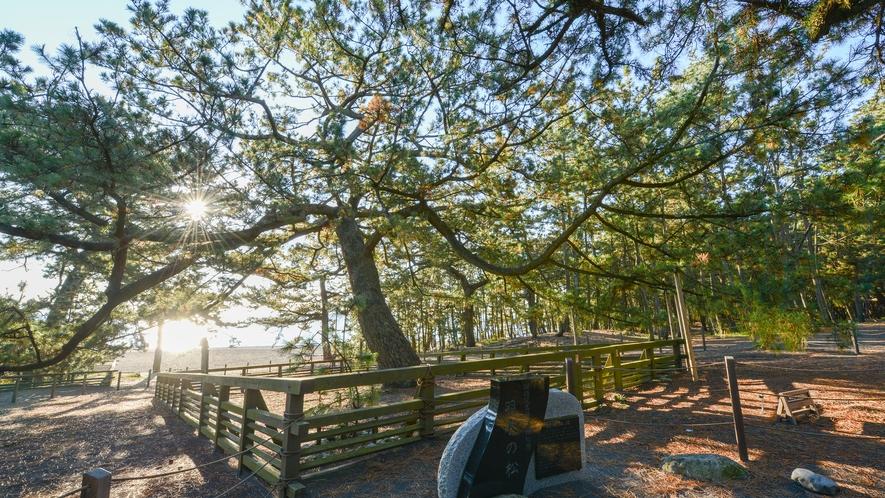 **【当館から徒歩1分/羽衣の松】天女の羽衣伝説の舞台となった松の木です