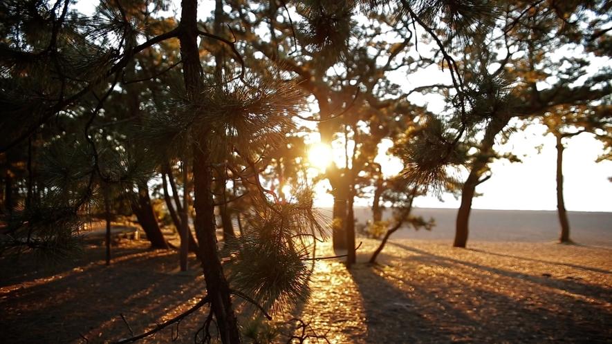 **【周辺/三保の松原】朝日差し込む松林を超えた先に、静かな海岸