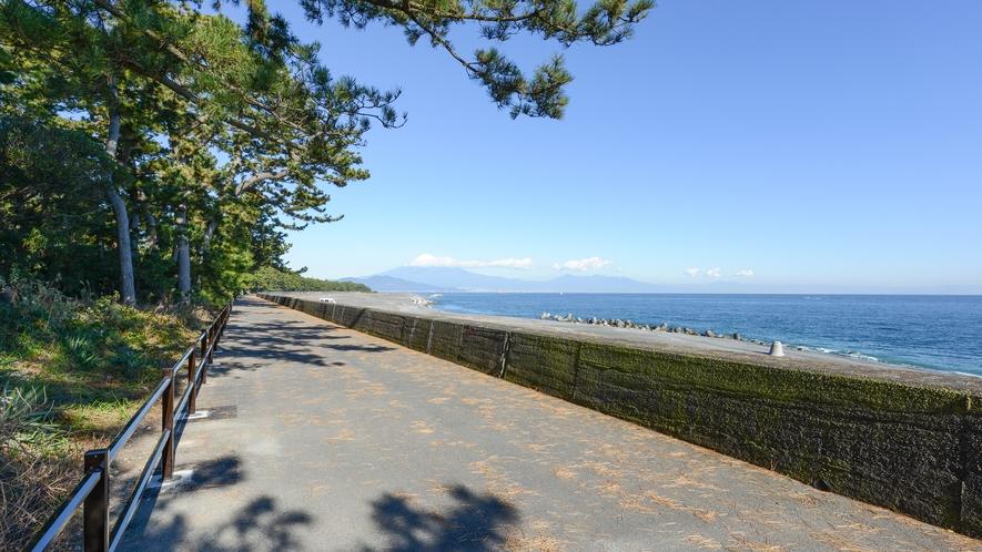 **【周辺/鎌ヶ崎サイクリングロード】枝葉をのばす松と富士山の風景もおすすめです