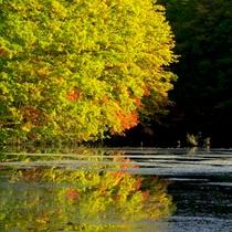 秋の曲沢沼