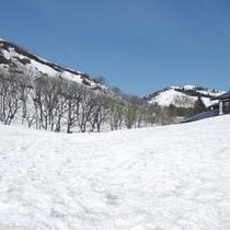 *【初春の風景(4月)】宿の裏山を撮影。4月中旬にもなると雪解けが始まり、徐々に地面が見えてきます。