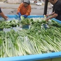 信州名物野沢菜洗いです。