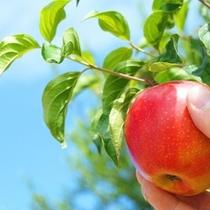 信州名物リンゴ狩りやブルーベリー狩りが楽しめます
