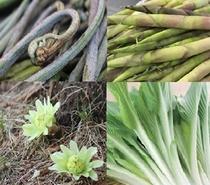 山菜の美味しい時期は春です。