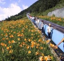 横手山スカイレーターとスカイペアレフトで「満天ビューテラス」へ