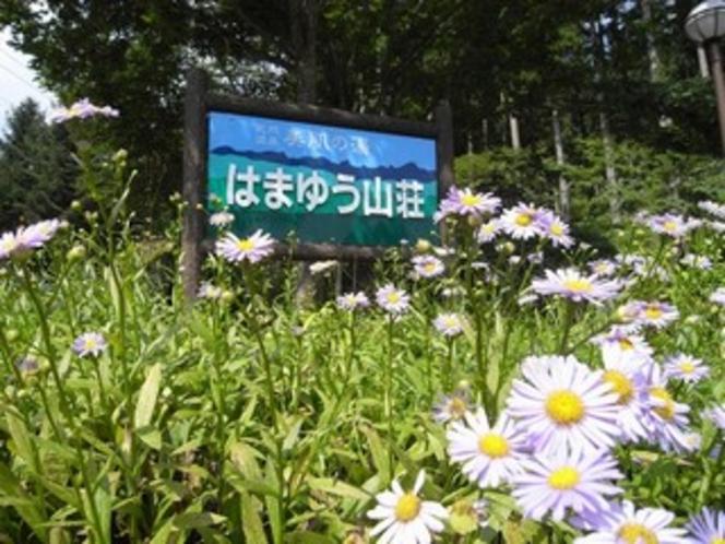 花に囲まれる看板