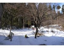 冬は裏山でソリ遊び♪