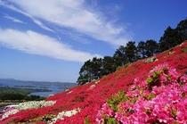 20ヘクタールの広さを誇る【長串山公園】