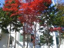 2008年の紅葉