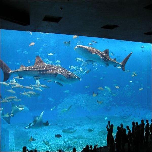 館内にて割引価格で美ら海水族館のチケットを販売中!! お求めの際はフロントまで!!