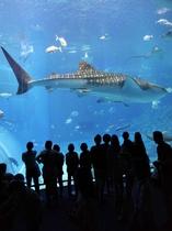 美ら海水族館へは・・・車で2時間半♪