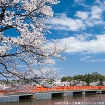 【観桜会】西堀橋。観桜会は、越後の春の象徴となっています