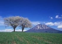 春の絶景「羊蹄山」