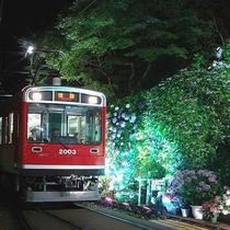 箱根登山電車【夜のあじさい号】※季節限定