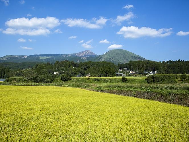 宿の周辺は田園風景が広がり、四季によって様々な色に変わります