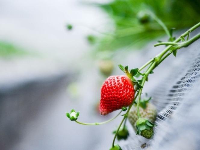 南阿蘇Night Strawberry Tour付き 1泊2食付きプラン