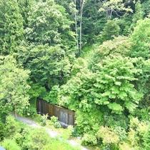 *【景観】自然に囲まれた静かな宿で、日頃の疲れを癒してください。