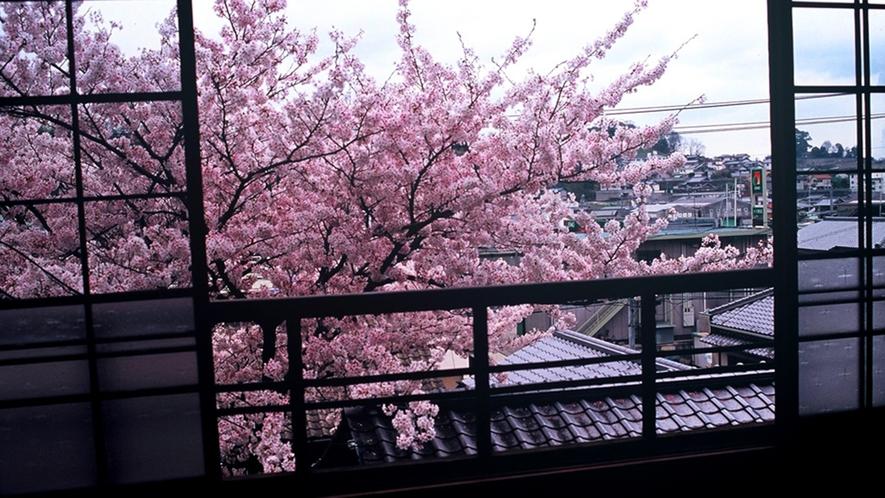 *お部屋から見る桜