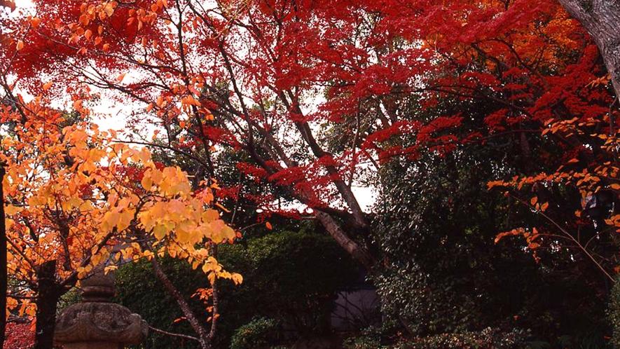 *庭園の紅葉