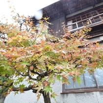 *庭園の木々も色づき秋を感じます。