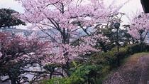*【庭園の桜一例】
