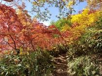 秋の妙高山山道