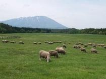 小岩井農場まきば園 放牧地