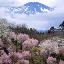 *春の飯坂