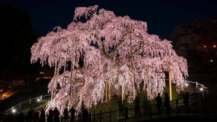 【三春滝桜】樹齢1000以上の日本三大桜に数えられる滝桜。国の天然記念物