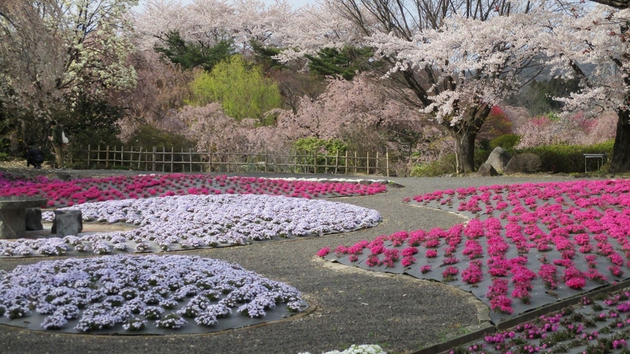 【 四季の里 緑水苑:春】四季折々の草花と樹々が魅力の回遊式庭園