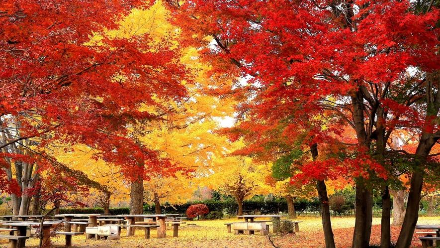 【 四季の里 緑水苑:紅葉】四季折々の草花と樹々が魅力の回遊式庭園