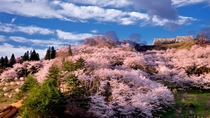 【二本松城跡】二本松城跡として国の史跡に指定「霞ヶ城公園」として日本さくら名所100選に選定