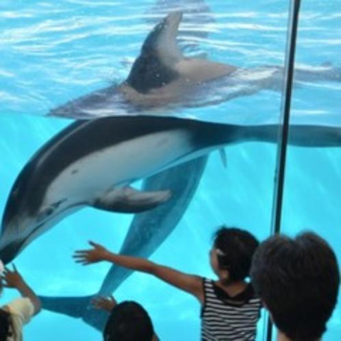 イルカと触れ合おう!下田海中水族館