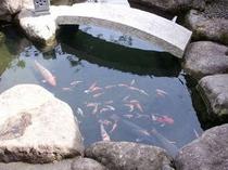 31. 中庭の鯉の仲間達。優雅に泳ぐ姿に思わず足を止めて