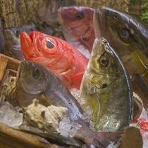 選べる地魚