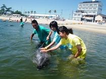 イルカふれあいビーチ体験