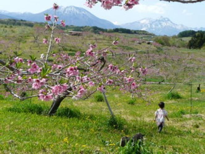 丹霞郷の桃の花