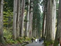 戸隠、奥社の杉並木1