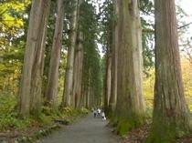 戸隠、奥社の杉並木2