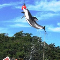 【下田海中水族館】イルカショーも人気