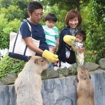 【伊豆シャボテン動物公園】えさやり体験