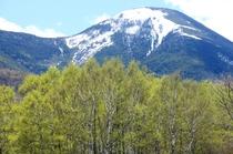 蓼科山の残雪と新緑