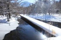 冬の御泉水自然園