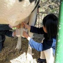 鷹山ファミリー牧場で乳搾り