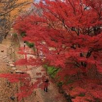 上田城二の丸堀