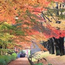 上田城のけやき並木