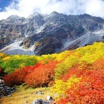 【涸沢紅葉】秋の涸沢カールはナナカマドの赤やオレンジ、ダケカンバの黄葉に染まり、まさに錦繍の秋